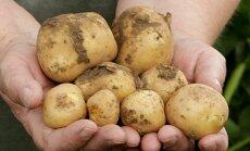 Kalle Hamburgi kartulipõld