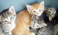 Kas sinu kass on ettearvamatu või hoopis domineeriv? Kodutiigri käitumise määrab tema isiksusetüüp