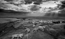 Wildlife Photographer of the Year 2014
