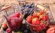 20 maitsva vilja haigustpeletavad omadused