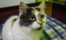 KODULEIDJA: kõik võrratu ja majesteetlik ühes kassis - saage tuttavaks, see on Lissa!