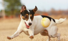 Horoskoop: Mida sinu koera sodiaagimärk tema kohta räägib?