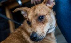 Õle tänava päästetud koerad hoiupaigas