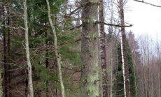 """<a href=""""http://blog.maaleht.ee/leilimetsalood/?p=8919"""" target=""""_blank"""">Leili metsalood: Sõjahaavadega vanad puud</a>"""