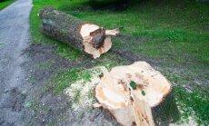 Puude langetamine
