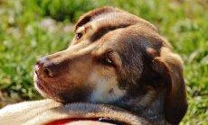 Vaata, kas sinu lemmikloom kuulub riskigruppi, keda kuumarabandus rohkem ohustab