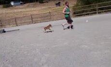 SAA TUTTAVAKS: Maailma pisim hobune on väiksem kui paljud koerad