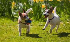 Kuidas jalutuskäik koerale veelgi põnevamaks muuta?