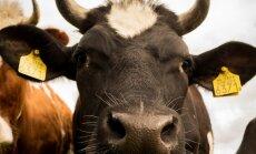 VIDEO: Balti riikide esimene farmiloomadele mõeldud varjupaik avas oma uksed