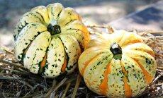 Vaata, mida aednik oktoobris tegema peaks?