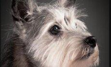 Soe ja südamlik GALERII: Eaka koera sügav silmavaade räägib nii mõndagi