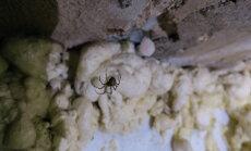 Eestimaa Loomakaitse Liit leidis Tallinnast haruldase ämblikukoloonia