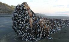 На пляже в Новой Зеландии нашли