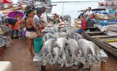 Kalad, keda kardetakse