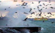 Ilmateenistus: ilm muutub ohtlikuks, tuul puhub üle 30 m/s ning