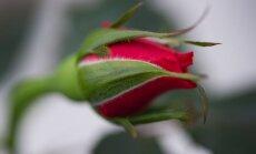 Гороскоп верности: как знаки зодиака ведут себя в отношениях