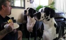 Lustakas VIDEO: Jutukas taani dogi läheb peremehega võileiva pärast tuliselt vaidlema