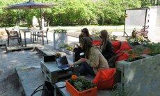 Tallinna Lillefestivalil saab aiakontoris töötades nautida kaunist vaadet