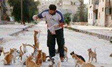 Südamlik lugu: mis on saanud Süüria sõjapiirkonnas maha jäetud kassidest?