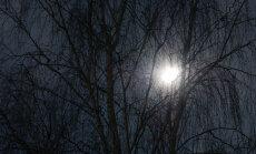 """Teadlased avastasid, kuidas """"magavat"""" puud ära tunda"""