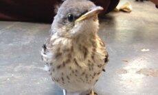 VIDEO: Väike linnuke saab jalgade raviks armsad sussid