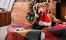 FOTOVÕISTLUS: Valime 2016. aasta kõige vingemat jõululooma! Võitja on selgunud!