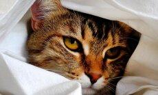Kass tahab kodu ja kõik vaibad täis sirtsutada? Nipid, mille abil oma karvakerale puhtuse pidamist õpetada