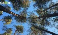 Metsamoor jagab sügispimedusega hakkama saamise tarkusi: Eesti taimed on soojendavad ja rahustavad