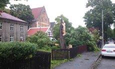 Pärnus Steffani pizza vastas murdunud puu