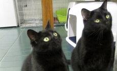 Kassijaama kassilood: Kuidas Ökul endale nime sai ja mis on Pantrikul hingel