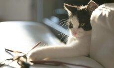 Viis nõuannet, kuidas valida kassile mänguasi, millega ta tõepoolest ka mängib