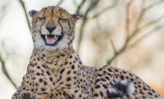 Mõned huvitavad loomafaktid, mis sind kiskjaid veelgi enam kartma panevad