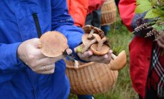 Maalehe seeneretk Kõrvemaal