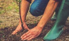 Soovitusi puude ja põõsaste istutamiseks