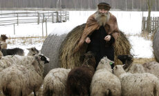 Tähetark IGOR MANG: Mida toob lamba-aasta 2015