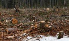 Linda-Mari Väli: riigi laastav ja silmakirjalik metsanduspoliitika ehk miks me korraldame reedel piketi metsaseaduse muudatuste vastu