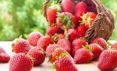Aeg maiustada. Kompott, supp, tort, vaht ja kreem - kõik maasikatest!
