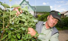 Viljandimaal Polli külas Seedri talu puukooli pidav Elmar Zimmer on seda meelt, et Eesti oludesse sobivadki kõige paremini ikka siinmail algusest peale kasvatatud viljapuutaimed.