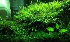 TASUB TEADA: millised taimed sobivad akvaariumisse