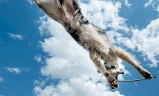 Rabavad FOTOD: Pühendunud fotograafil on pildile õnnestunud püüda koerte igapäevaelu värvikad ja lummavad hetked