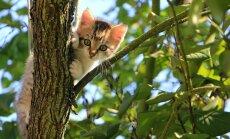 Varjupaikade MTÜ suurejooneline kampaania: 7 x 7 ehk Kingi kassipojale kodu!