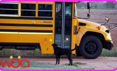 Lapsed kooli! Vaata, kui ustavalt koerad pere pisemaid koolist koju ootavad