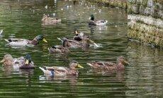 Lindude toitmisest parkides-11