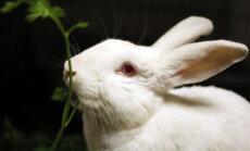 TASUB TEADA: kuidas sobitada küülikut teiste lemmikloomadega?