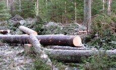 Leili metsalood: Metsast saab majale seinu ja lagesid