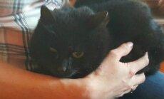 Toidukaupluse juures pikalt elanud haige kass vajab loomasõprade abi
