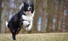 Kas koer vajab kaitset vabade radikaalide eest?