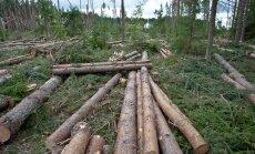 Kui lageraie on tehtud ja palgid varumisse viidud, langeb metsamaa väärtus mitu korda. Maamaksu määramisel seda aga paraku ei arvestata.