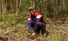 Võrumaa Metsaomanike Liidu juht Erki Sok on ka ise hoolas metsauuendaja. Pildil tegeleb ta kuusepuude istutamisega.