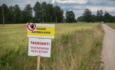 NÜÜD KA SAAREMAAL: VTA kahtlustab Saaremaa farmis sigade Aafrika katku